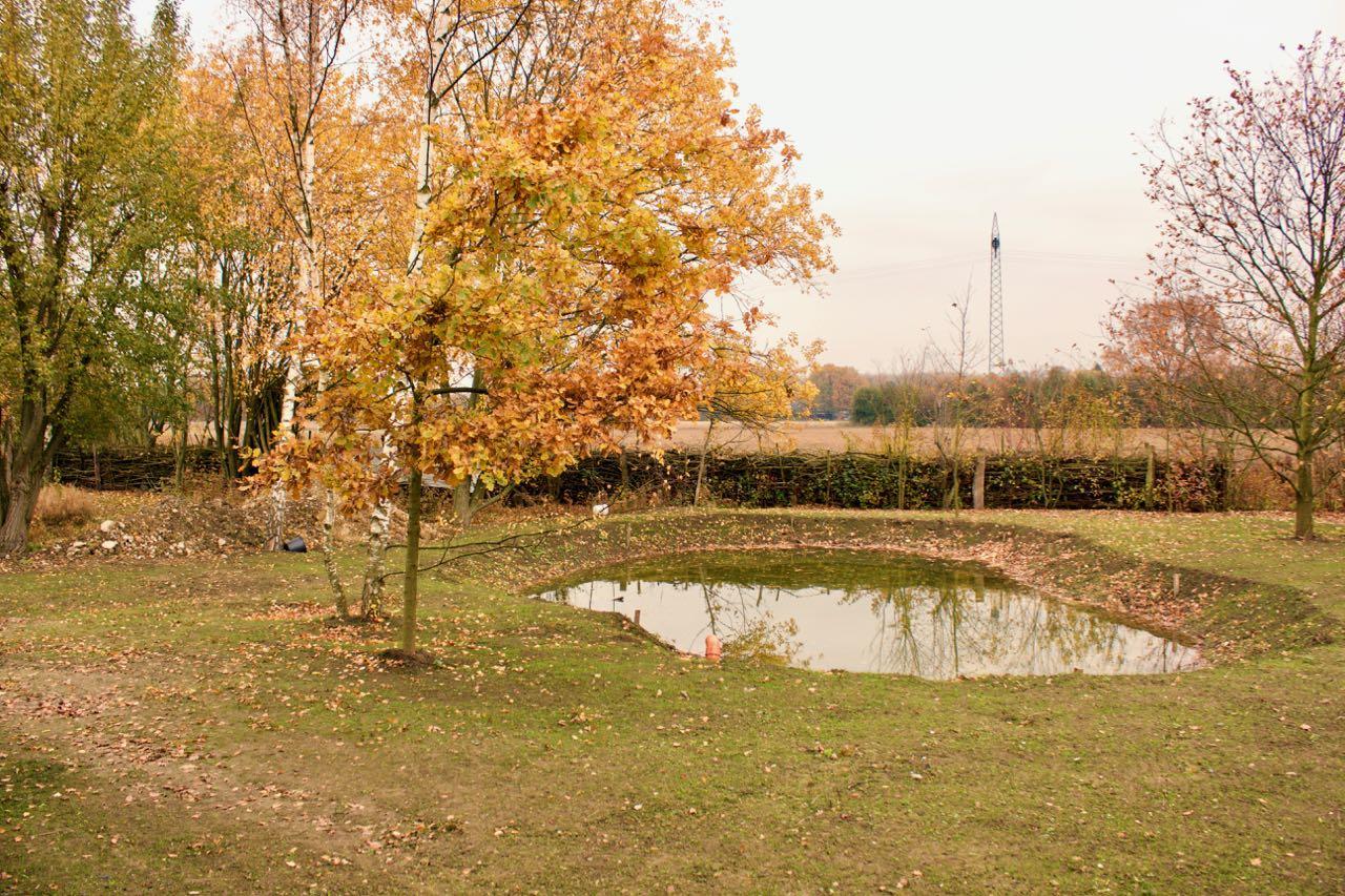 Teich im Herbst 2017